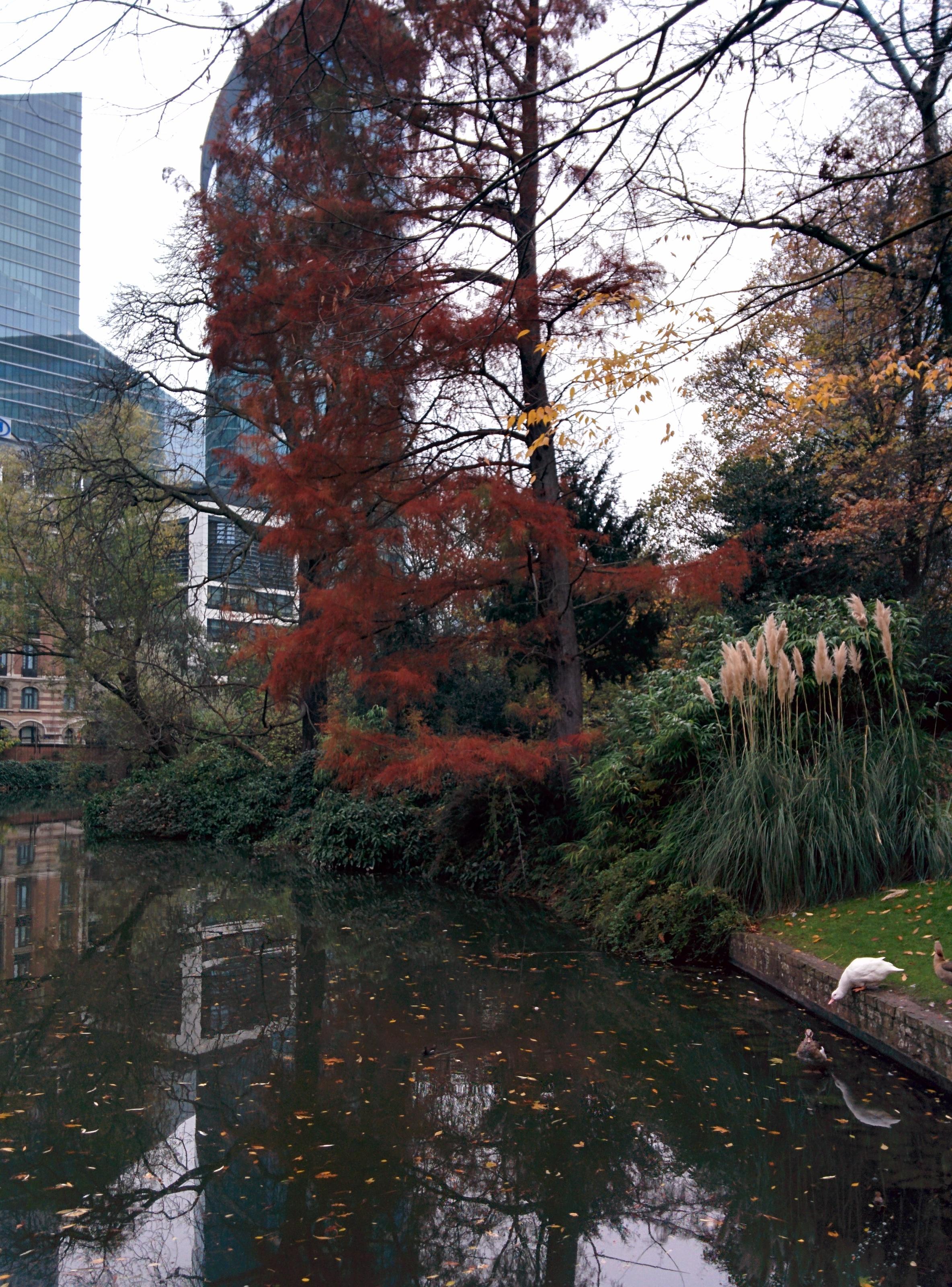 Parco Bruxelles città