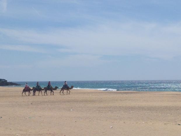 Cammelli sulla spiaggia in Marocco